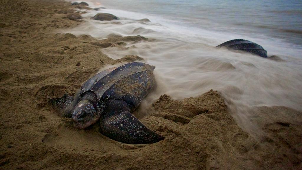 Turtles 7