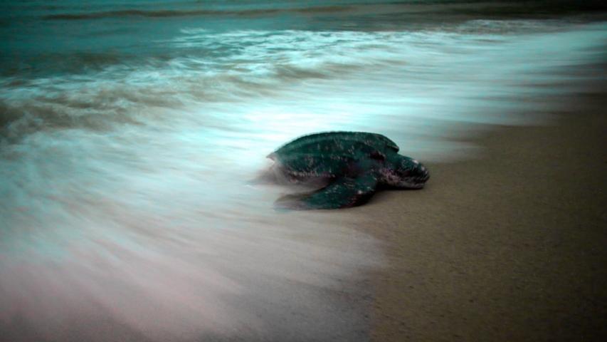 Turtles 10