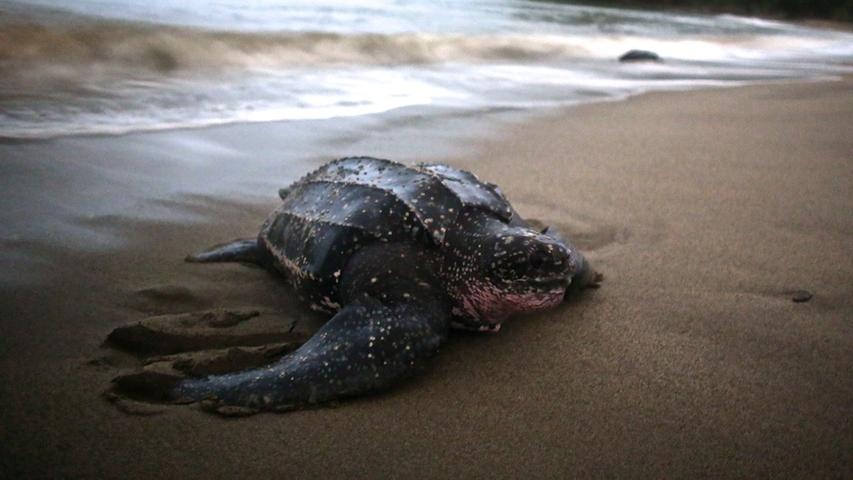 Turtles  12