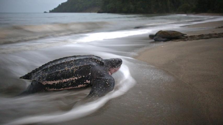Turtles 13