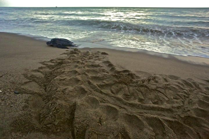 Turtles 14