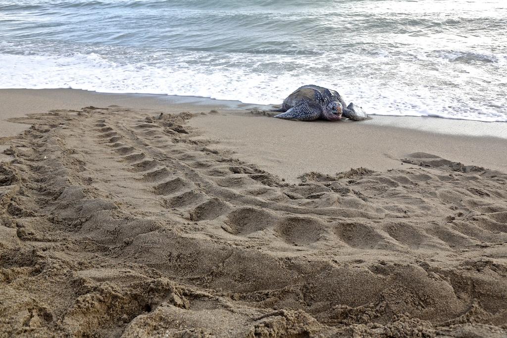 Turtles 15